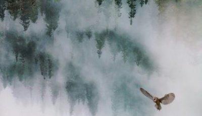 Czy będzie nowy sezon Twin Peaks?